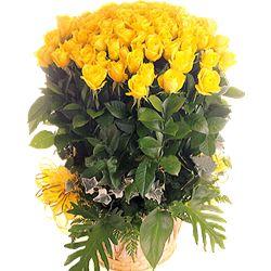 51枝黄玫瑰/爱你的感觉