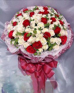 77枝白玫瑰/美��的��