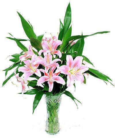 6枝百合/谢谢你的爱-订花人鲜花