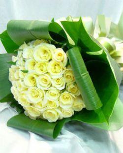 33枝白玫瑰/爱人