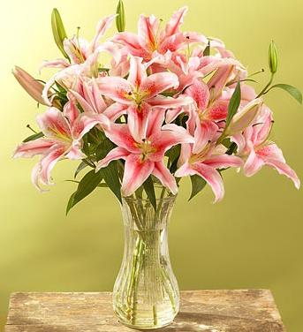 1扎粉色百合/永恒的爱恋-订花人鲜花