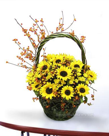 17枝向日葵/暖暖亲情-订花人鲜花