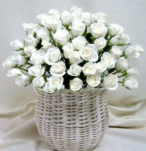 52枝白玫瑰/���的祝福