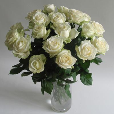 21枝白玫瑰/���的祝福-�花人�r花