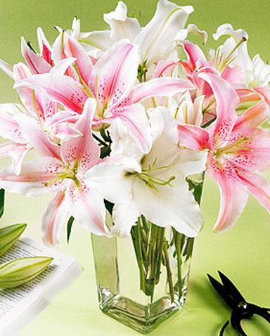 花瓶百合/陪伴着你-订花人鲜花
