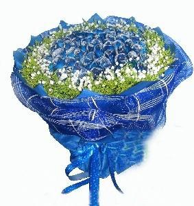 99枝蓝玫瑰/今生的唯一