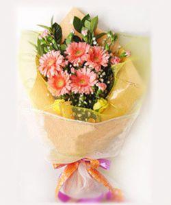 5粉色太�菊/祝福