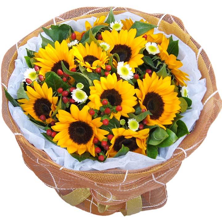 就要你快乐/11朵向日葵-订花人鲜花