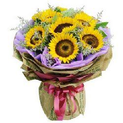 你的笑�/6朵向日葵